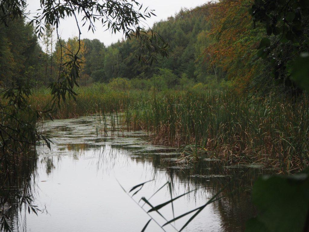 Schwonauer Weg