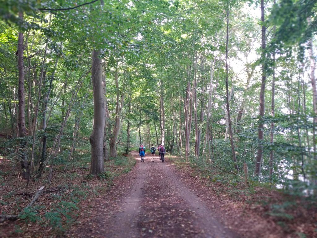 5-Seen-Fahrt zu Fuß - Immer durch den Wald am Höftsee und Behlersee entlang