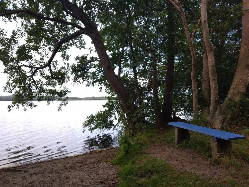 5-Seen-Fahrt zu Fuß am Behler See: Wo Kormorane sind gibt´s auch Fische. Zumindest eine Zeit lang. Die Wasservögel jagen sie bis auf 30 Meter Tiefe