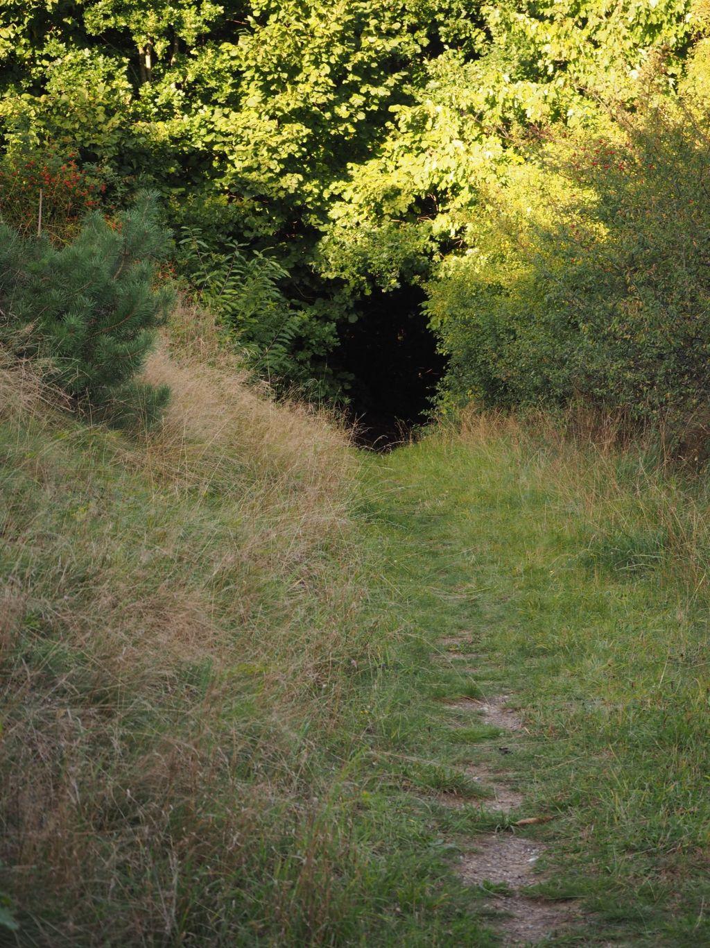 Hängebargshorst_Überwucherte Wege