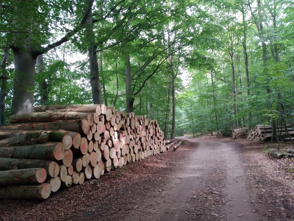 Der Diekseeholm ist ein klassischer Nutzwald