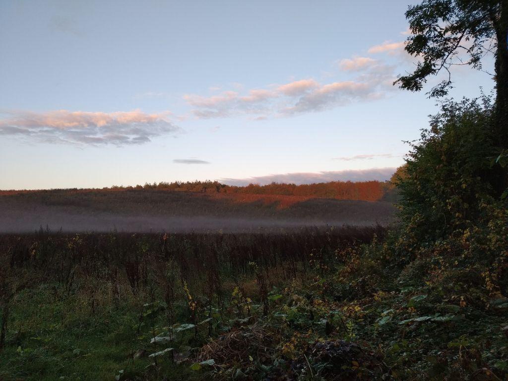 Nebelschwaden über einem Feld bei Krummsee