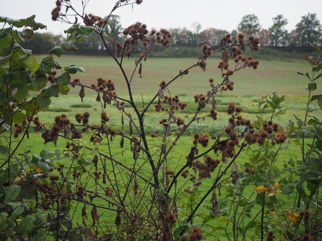 Felder und Wiesen bei Söhren