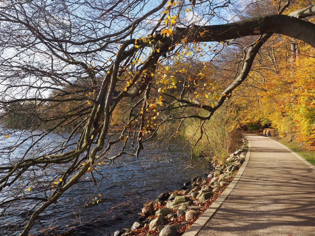 Goldener Herbst an der Promenade