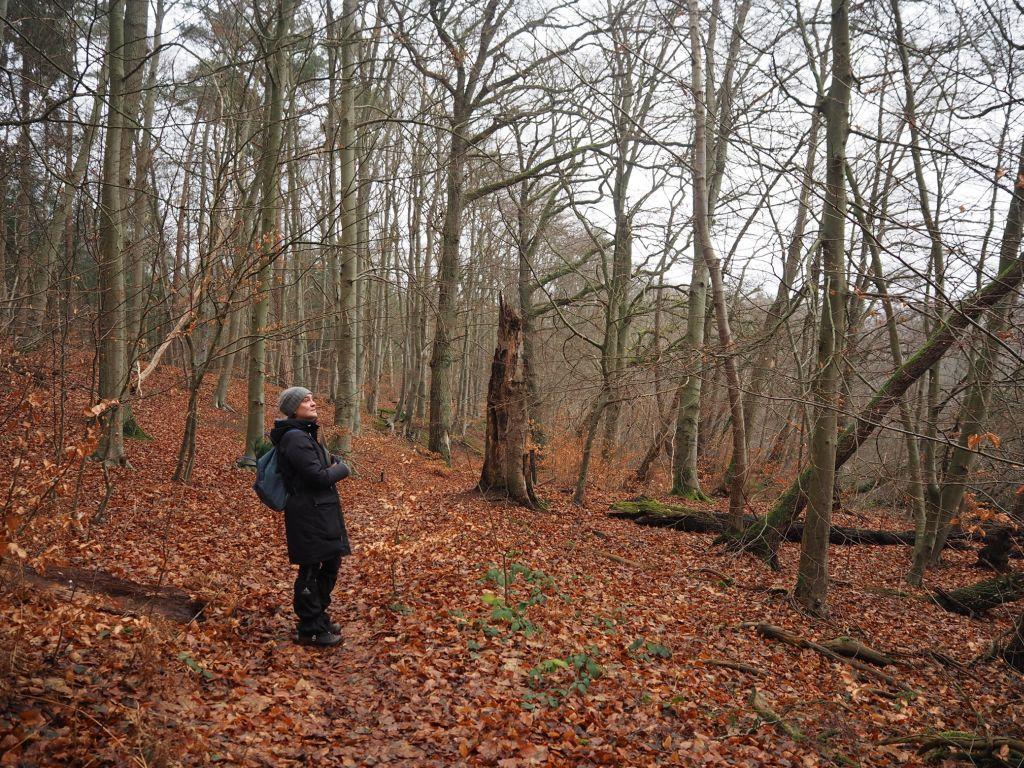 Die Waldbademeisterin entdeckt den Winterwald immer wieder neu