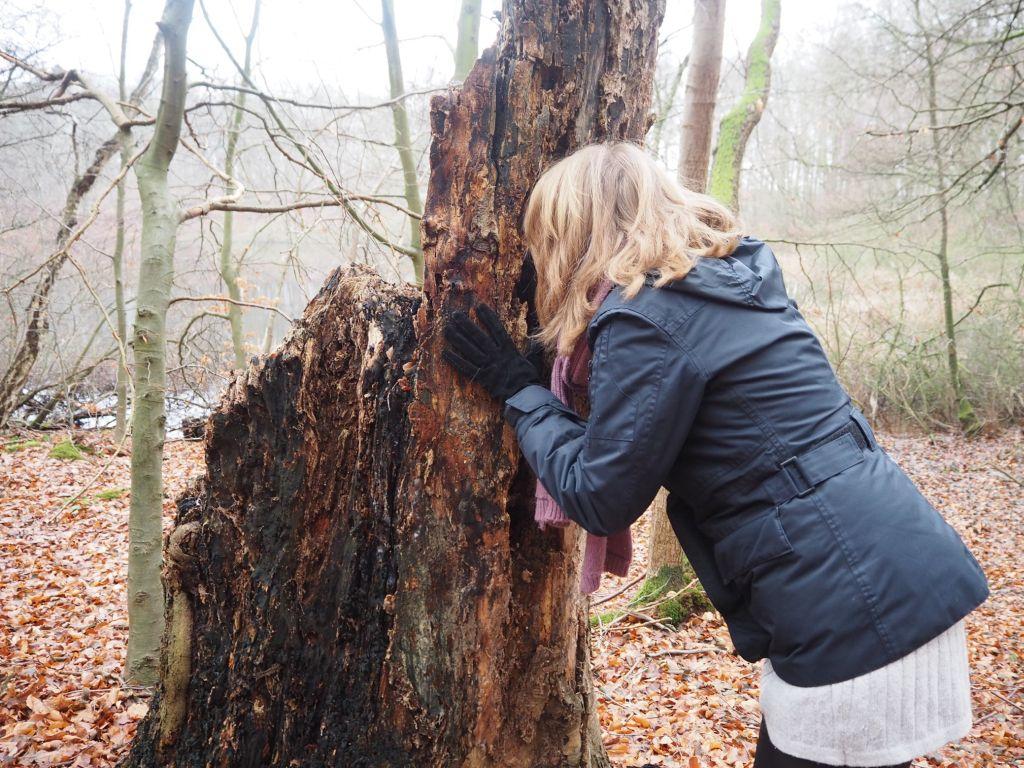 Neue Perspektiven im Winterwald