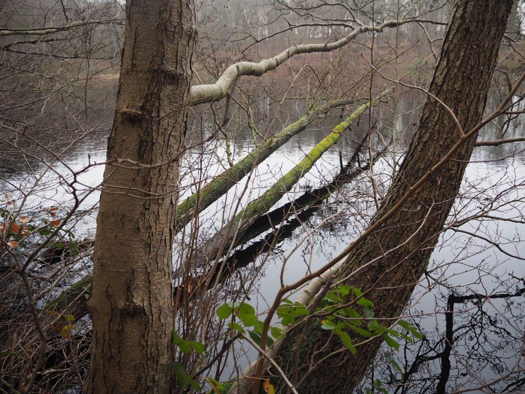 Grafische Baumanordnung im Winterwald