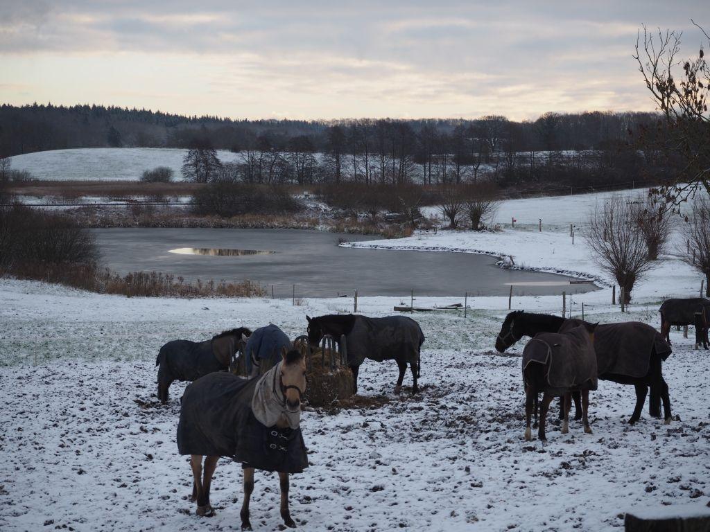 Pferde von Hof Bast im Winter