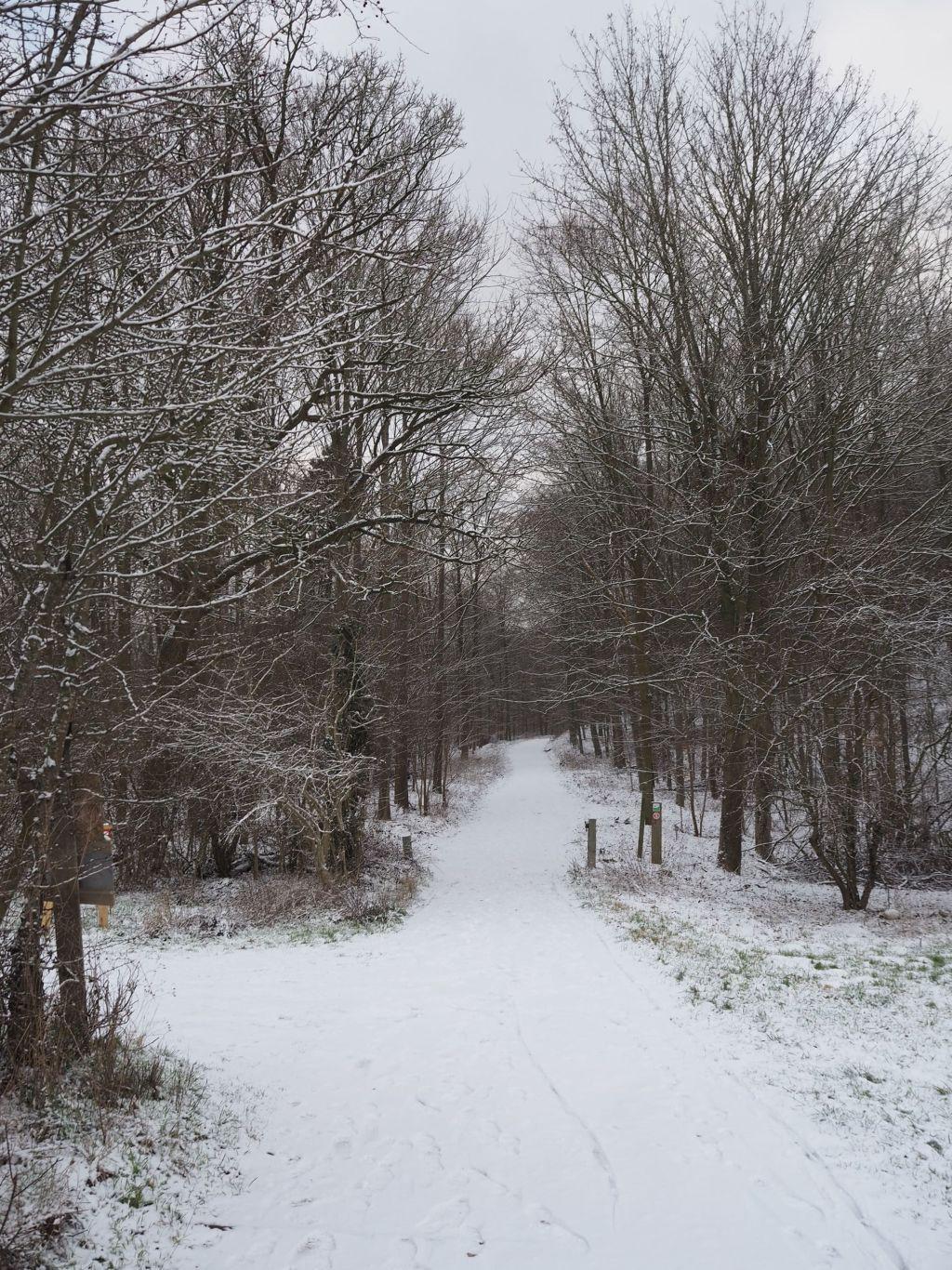 Weg ins winterliche Prinzenholz