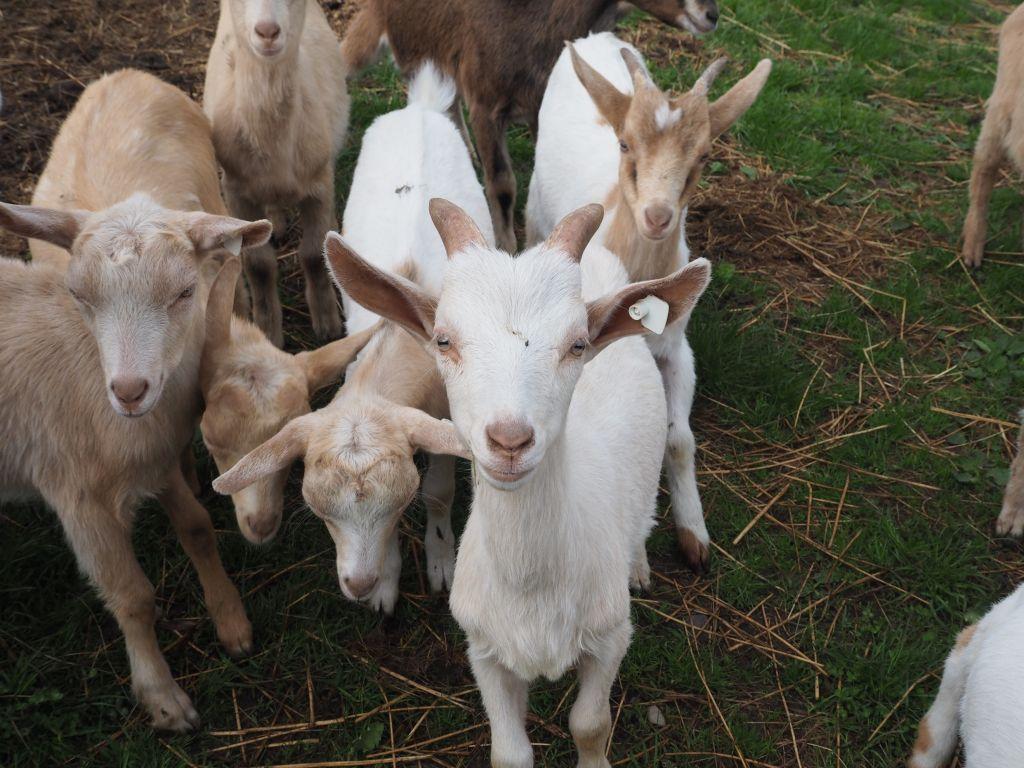 Die Nutztier-Arche auf dem Ziegenhof im Wiesengrund