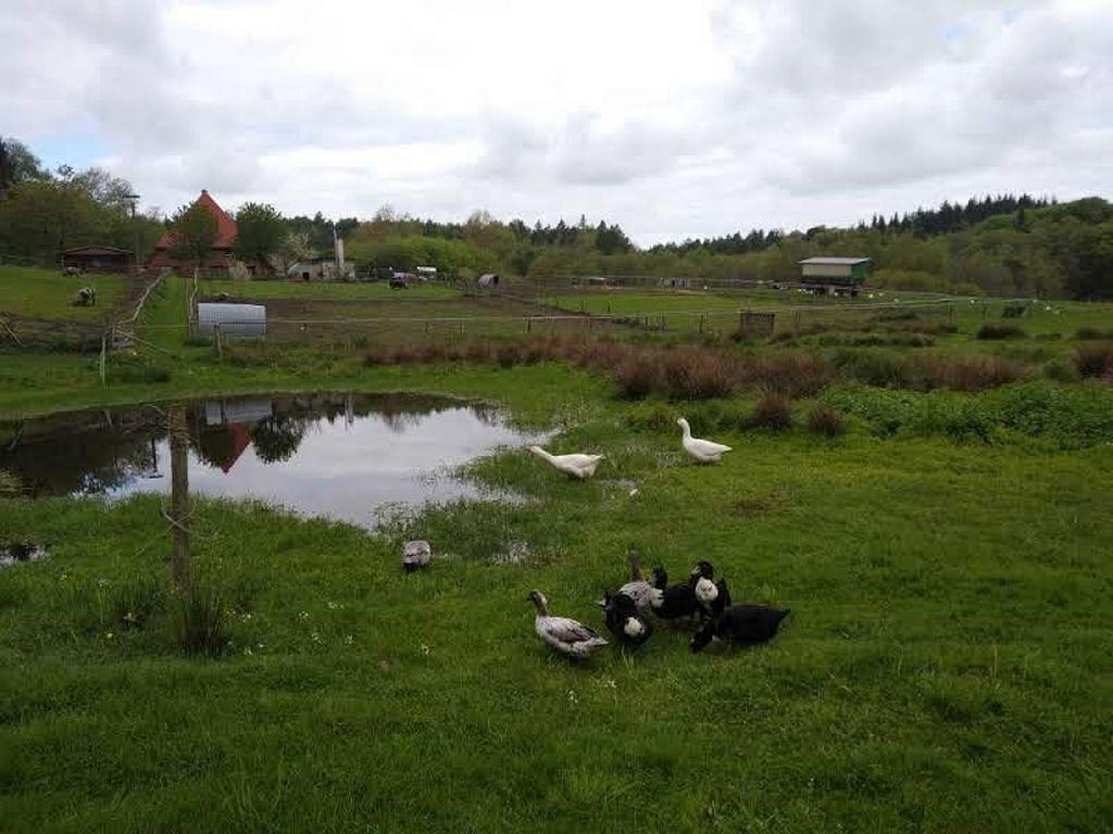 Die Nutztier-Arche liegt mitten im Grünen