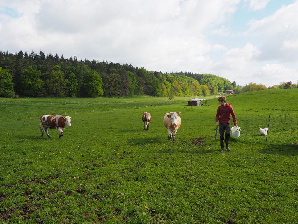 Auch die nächste Betreiber-Generation liebt die Nutztier-Arche