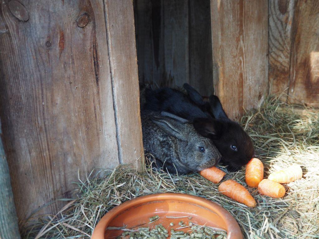 Erst essen dann toben heißt es für die Kaninchen