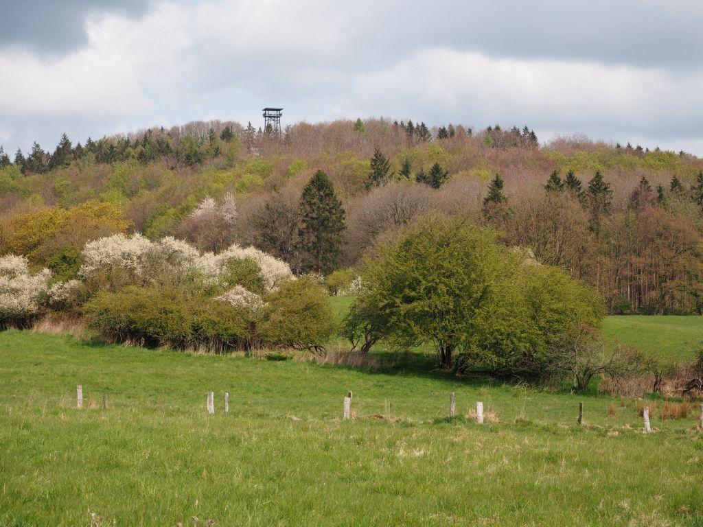 Vom Holzbergturm hat man den besten Blick über den Holsteiner Frühling