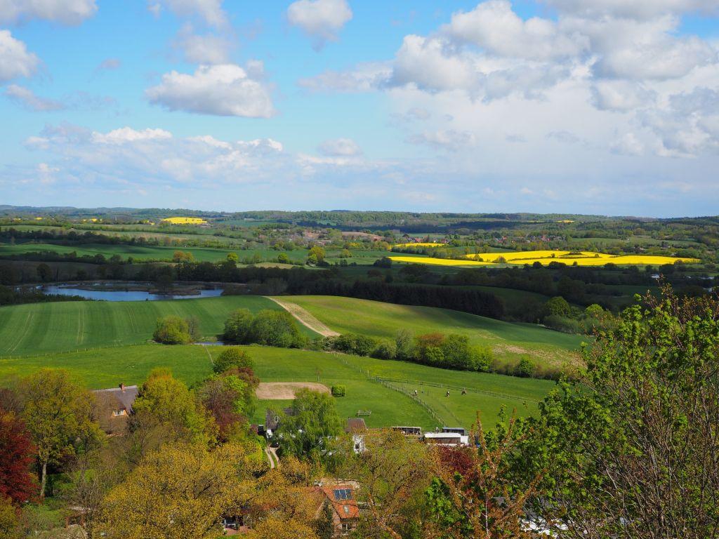 Frühling in Holstein ist grün und gelb