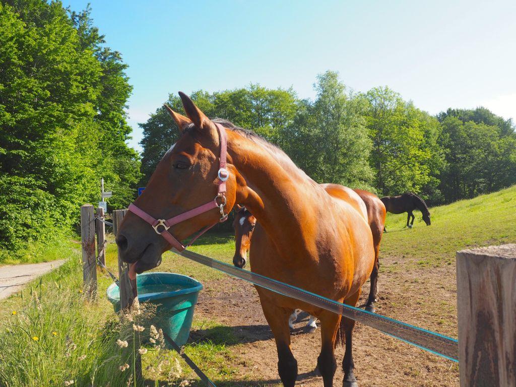 Am Wegesrand Idylle mit Pferd